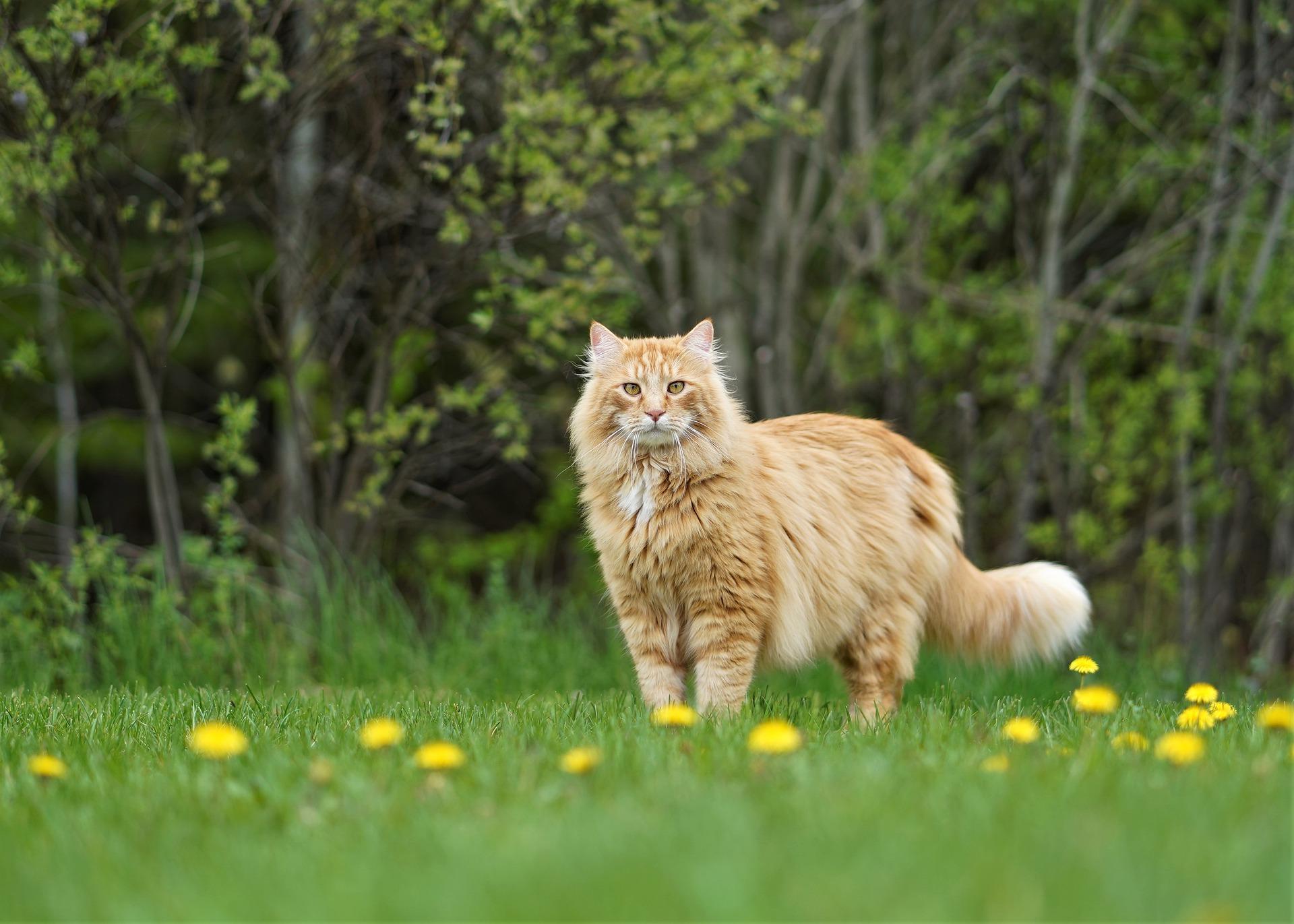 cat-4604776_1920