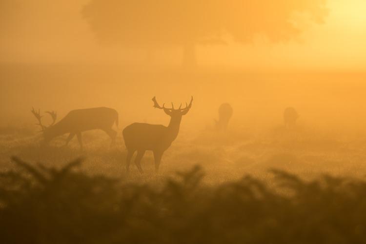 deer-1082318_1920