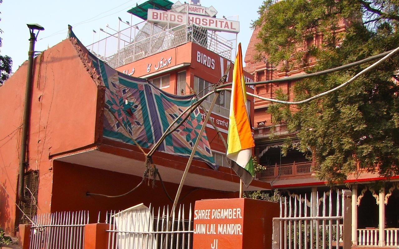 bird hospital india delhi