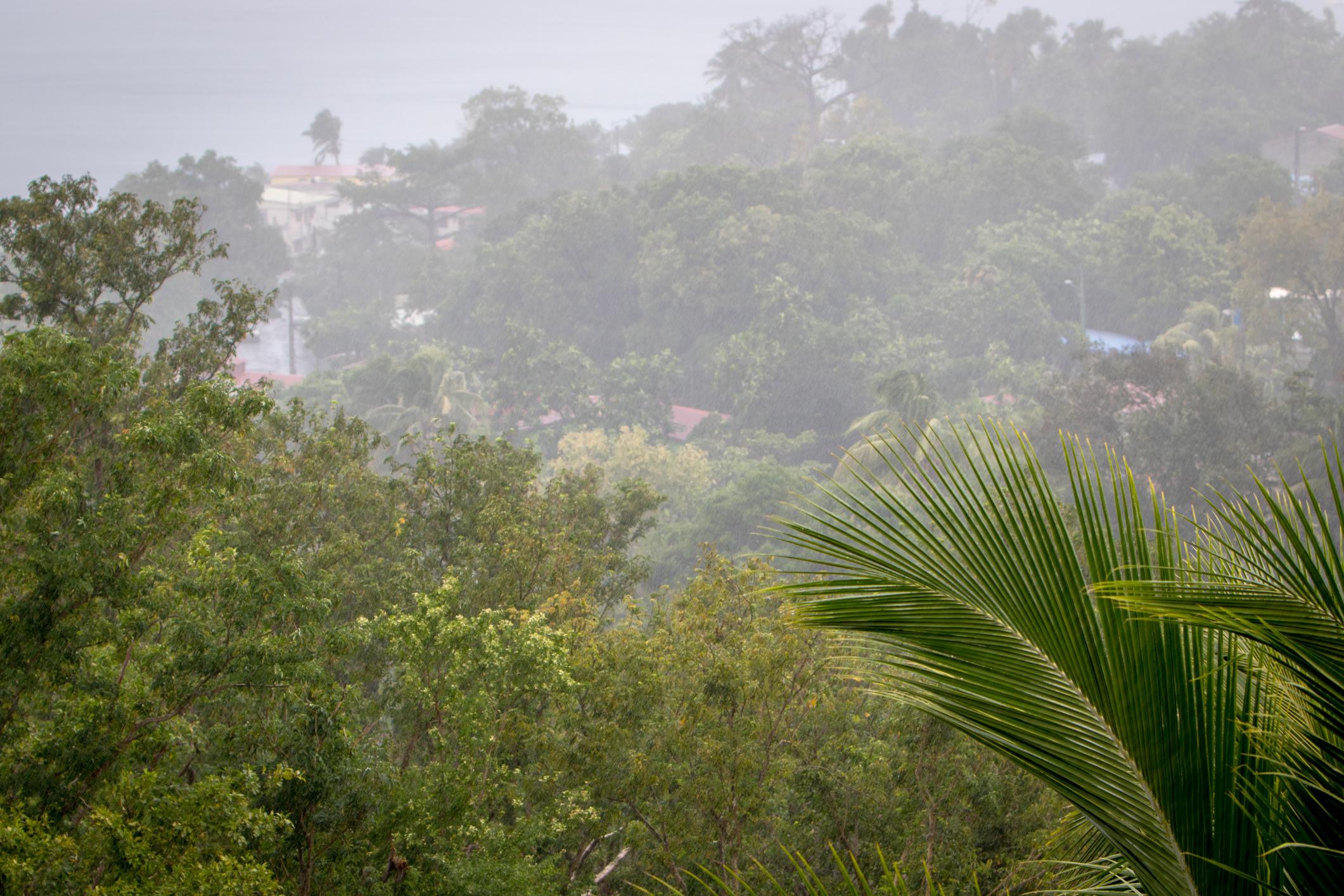 caribbean licensed hopsalka