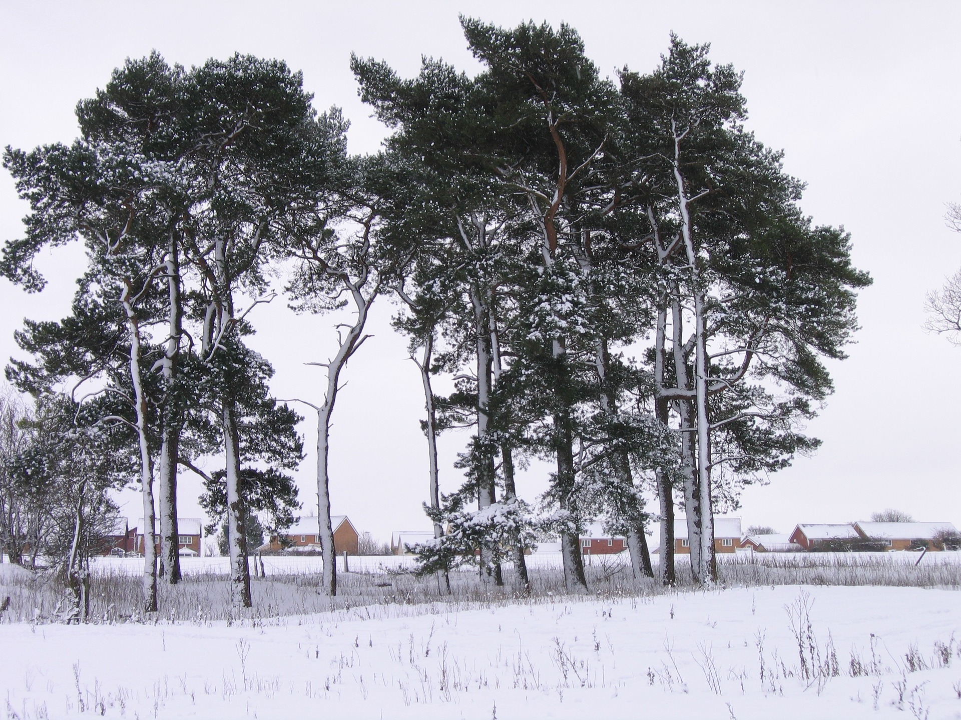 winter-19455_1920