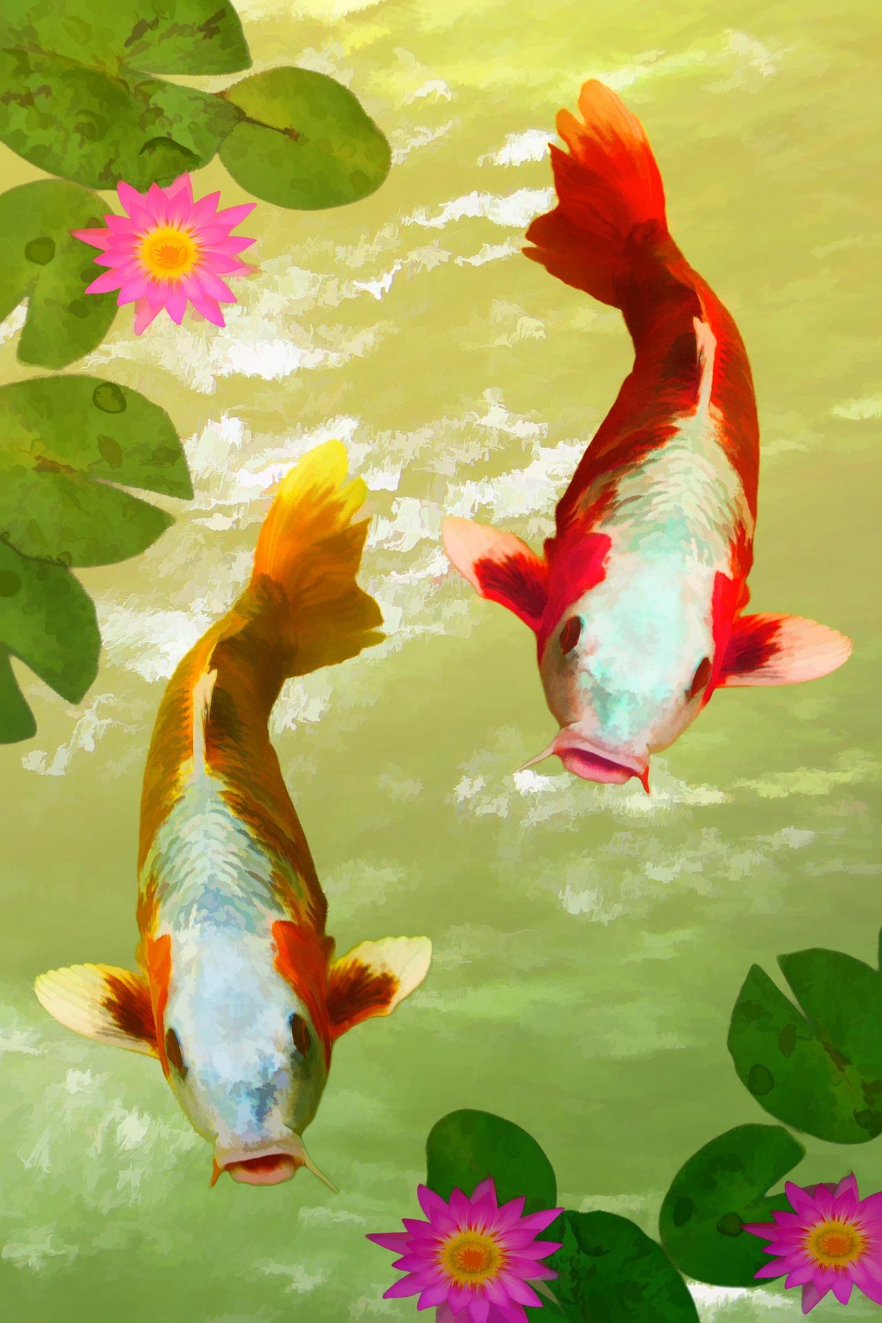 fish-884694_1920