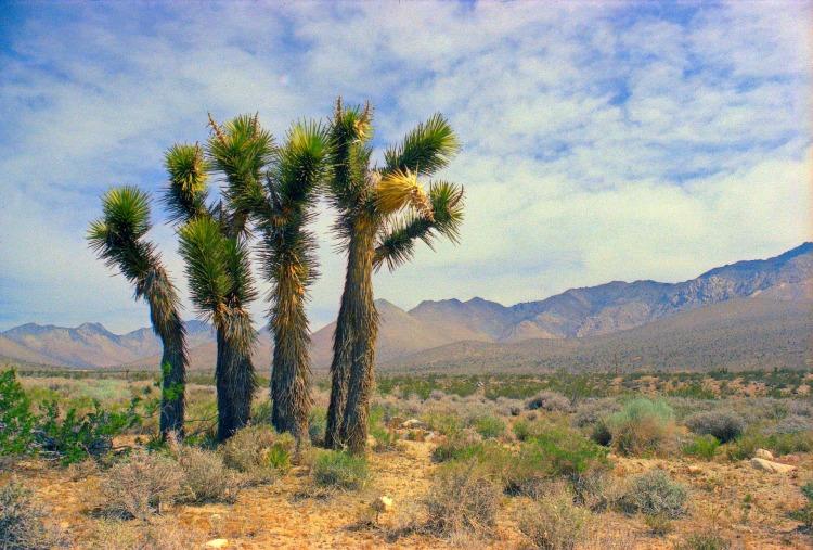 palm-trees-5047331_1920