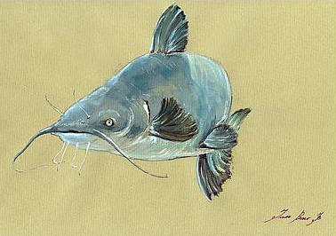 2-channel-catfish-fish-animal-watercolor-painting-juan-bosco